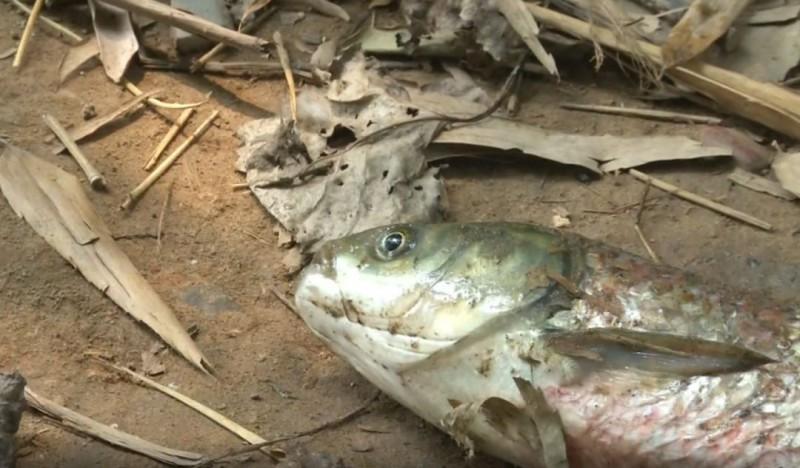 一出太阳,鱼塘水成锈水还大量死鱼,究竟怎么回事?
