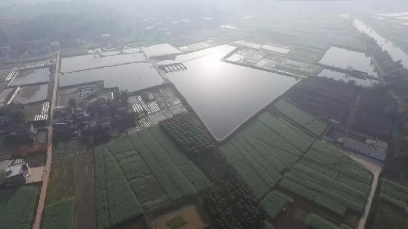 四川内江市东兴区石子镇大力发展水产生态养殖助乡村振兴