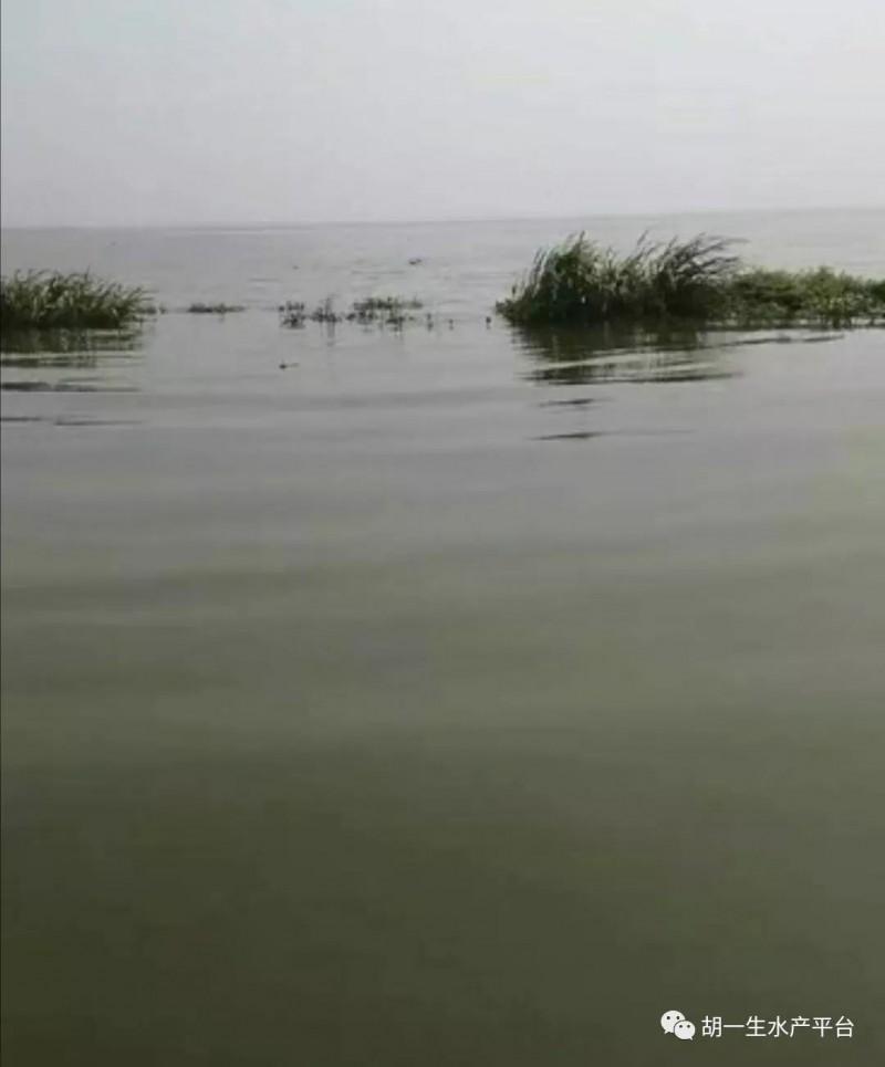 生态,是水产养殖立足之本