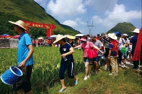【稻渔专题】广东韶关市:今年安排400万元发展稻渔综合种养