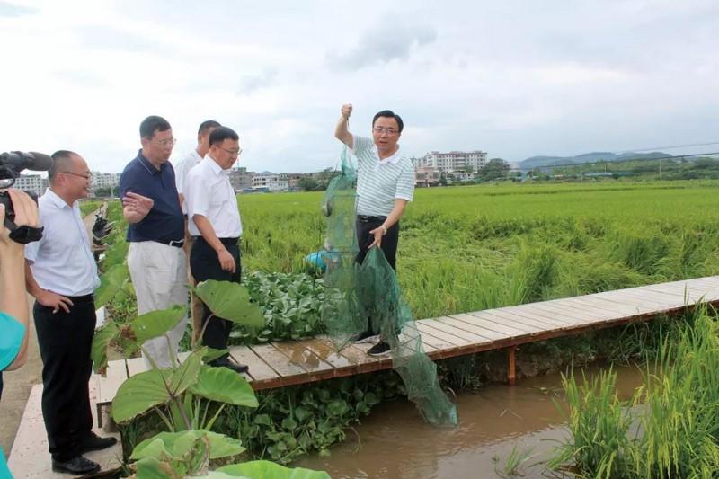 【稻渔专题】广东梅州市:上下齐绘鱼游稻花香生态画卷