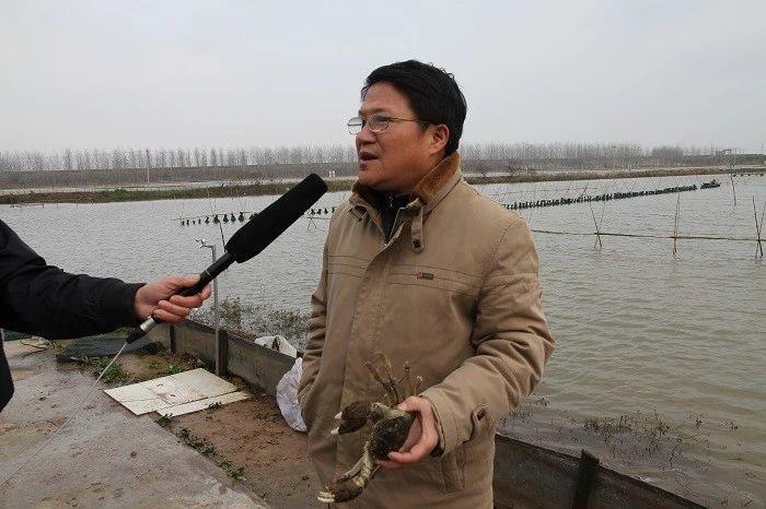 网箱拆除倒逼水产业转型突围,鱼菜共生、池塘循环水、稻渔综合种养等模式迎来新机遇!