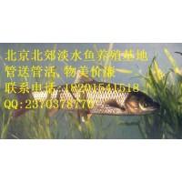 2019北京草鱼批发,北京鱼苗批发,北京锦鲤批发!四大家鱼批发!放生鱼批发!