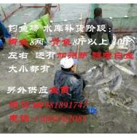 【钓鱼场补货找我】翘嘴白鱼 加州鲈鱼 黄颡鱼(苗) 大小青鱼 鲫鱼等现货供应。