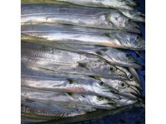 求购印尼白带鱼冻品