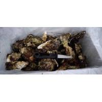 福建生蚝,网红蚝家庭小包装4至5斤装
