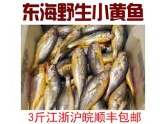 野生东海小黄鱼批发销售
