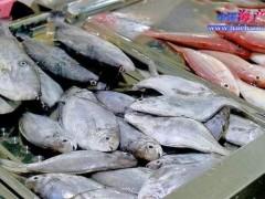 内行人吃鱼,认准5种买,人工无法养殖,都是野生鱼,便宜又好吃